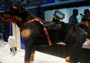 Sony Action Cam pet mount prototype