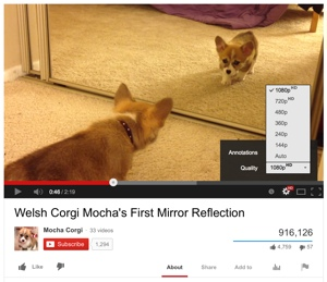 YouTube video still of a corgi puppy