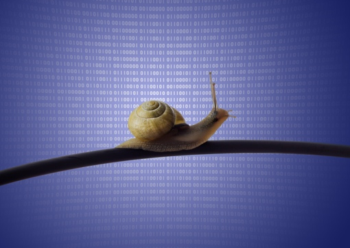 Snail on data background