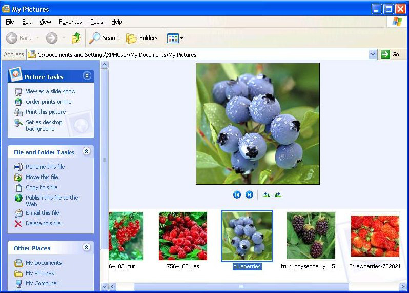 Windows XP filmstrip view
