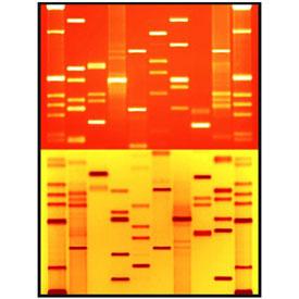 DNA 11 portraits