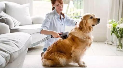 Dyson Groom pet attachment