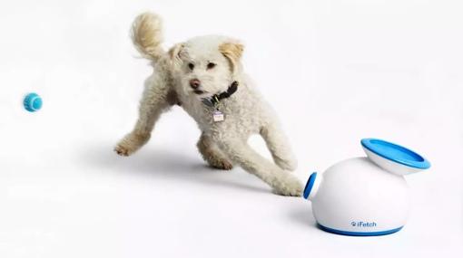 iFetch ball launching toy