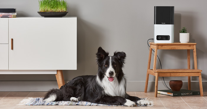 The Best Smart Pet Feeders