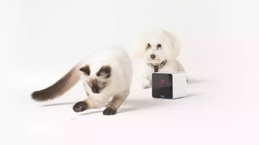 Petcube with cat and dog