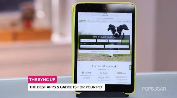 Can A Dogs Cycle Sync Up With Ypur Cycle