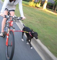 Running Dog Bike Tow Leash