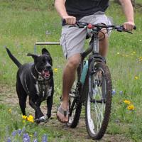 WalkyDog Hands Free Dog Leash