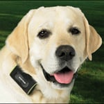 Zoombak Advanced A-GPS Dog Locator