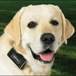 Zoombak Advanced A-GPS Dog Locator
