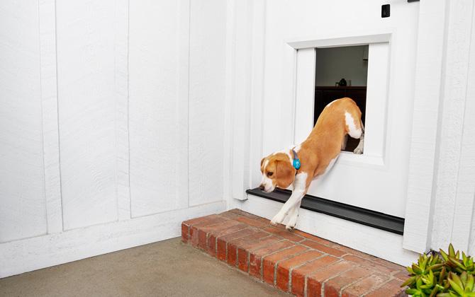 Chamberlain MyQ Pet Portal pet door