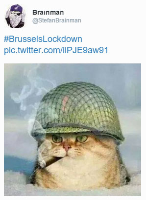 #BrusselsLockdown cat tweet