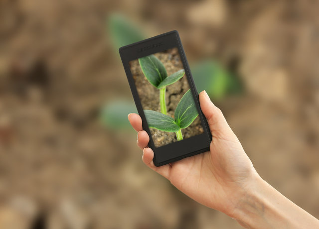 Smartphone photo of plant