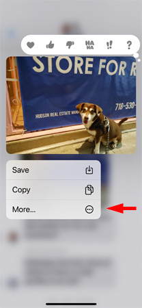 Screenshot of text messages showing dog photo with reaction icons (heart, thumbs up, thumbs down, Ha Ha!, and question mark) and a menu with Save, Copy and More. The More is pointed out.